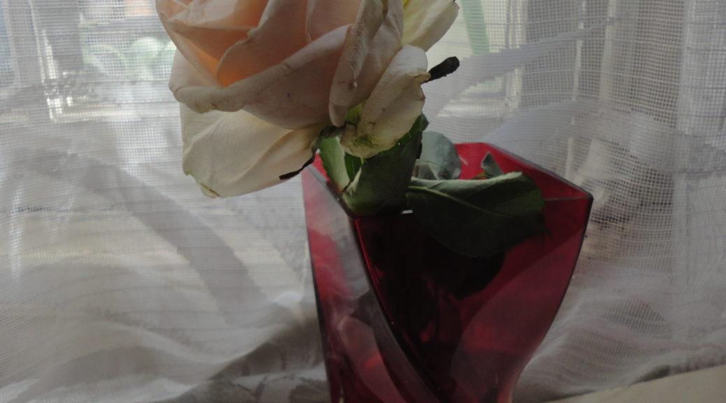rose de clotilde